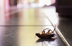 know about pest control